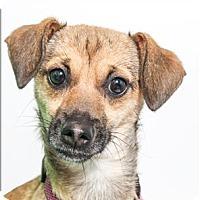 Adopt A Pet :: Lo-Fi - San Luis Obispo, CA