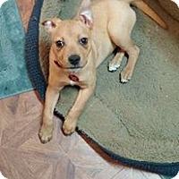 Adopt A Pet :: Carny - Eastpointe, MI