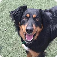 Adopt A Pet :: Sierra aka Bonnie - Grafton, WI