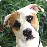 Adopt A Pet :: DANNY - Red Bluff, CA