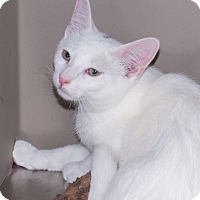 Adopt A Pet :: Dash - Elmwood Park, NJ