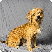 Adopt A Pet :: La Melinda - Tulsa, OK