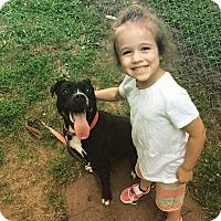 Adopt A Pet :: Sasha - Villa Park, IL