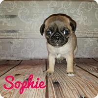 Adopt A Pet :: Sophie - Rathdrum, ID