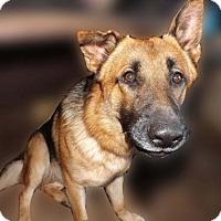 Adopt A Pet :: Koda - Citrus Springs, FL