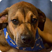 Adopt A Pet :: K.C. - Okeechobee, FL