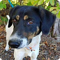 Adopt A Pet :: Kassidy **FOSTER NEEDED** - New York, NY