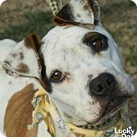 Adopt A Pet :: Gayle - Washington, DC