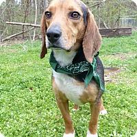 Adopt A Pet :: Pickle - Mocksville, NC