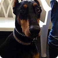 Adopt A Pet :: Chloe - Santee, CA
