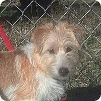 Adopt A Pet :: Bucky - Brattleboro, VT