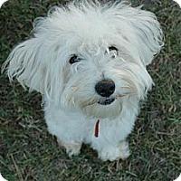 Adopt A Pet :: CHARLIE - Mission Viejo, CA