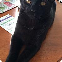 Adopt A Pet :: Carter1