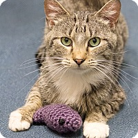 Adopt A Pet :: Finian - Chicago, IL