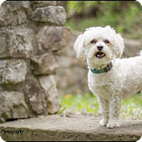 Adopt A Pet :: Bailey - Mississauga, ON