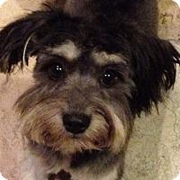 Adopt A Pet :: Tessa - Turlock, CA