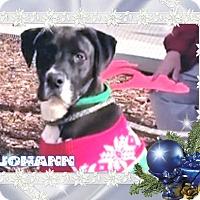 Adopt A Pet :: JOHANN-Low Fees Neutered - Red Bluff, CA