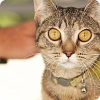Adopt A Pet :: Sugar - Coronado, CA