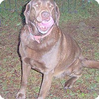 Adopt A Pet :: Coco - McKenna, WA