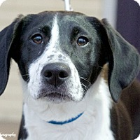 Adopt A Pet :: Holley - Marietta, GA