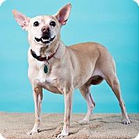 Adopt A Pet :: Trina - Houston, TX