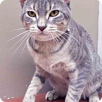 Adopt A Pet :: Chuckie - Plainfield, IL