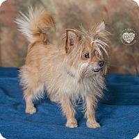 Adopt A Pet :: Mr. Bean - Inglewood, CA