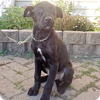 Adopt A Pet :: Raoul - West Chicago, IL