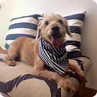 Adopt A Pet :: Dory - Dallas, TX