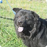 Adopt A Pet :: Bach - Staunton, VA
