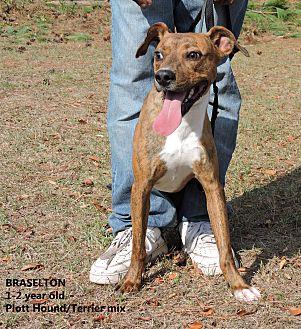 Plott Hound/Terrier (Unknown Type, Medium) Mix Dog for adoption in Washington, Georgia - Braselton