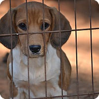 Adopt A Pet :: Heather - Pikeville, MD
