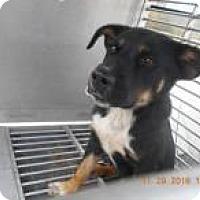Adopt A Pet :: Kringle - Rexford, NY