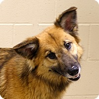 Adopt A Pet :: Otto - Columbia, IL