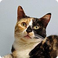 Adopt A Pet :: Squeaker - Spokane Valley, WA