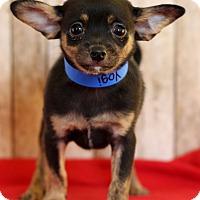 Adopt A Pet :: Yogi - Waldorf, MD