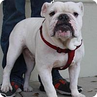 Adopt A Pet :: Grant - Pipe Creed, TX