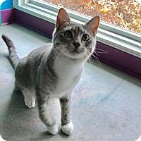 Adopt A Pet :: Stony - Topeka, KS