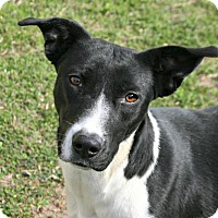 Adopt A Pet :: Bubbles - Lufkin, TX