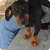 Adopt A Pet :: Ernie - Post, TX