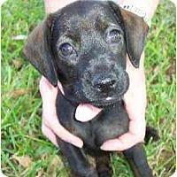 Adopt A Pet :: Rona - Sugarland, TX