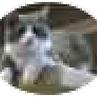 Adopt A Pet :: Blue - Pendleton, OR