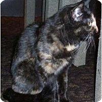 Adopt A Pet :: Purrl - Springdale, AR