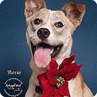 Adopt A Pet :: Rosie - Westfield, NY