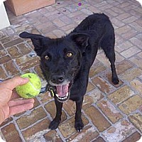 Adopt A Pet :: Jacob - Scottsdale, AZ