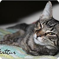 Adopt A Pet :: Arthur - McKinney, TX