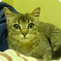 Adopt A Pet :: Bambi - McHenry, IL