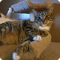Adopt A Pet :: Mittens - Richland, MI