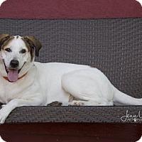 Adopt A Pet :: Nova - Drumbo, ON