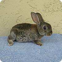 Adopt A Pet :: Cola - Bonita, CA